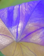 flower-kite